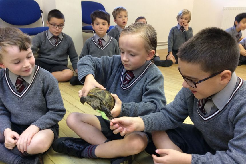 Ruby the Tortoise visits Highbury!