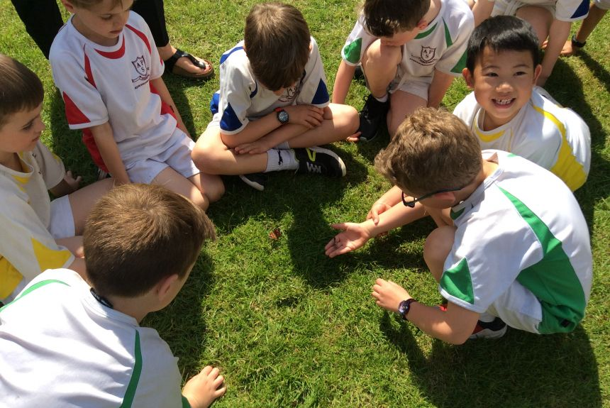 Year Two release their butterflies!